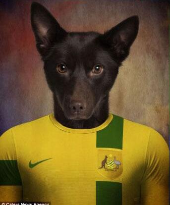 World Cup Kelpie